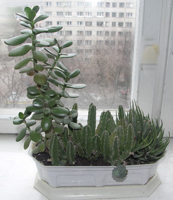 Композиция из комнатных растений фото